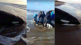 Así quedó la orca en la Costa Atlántica