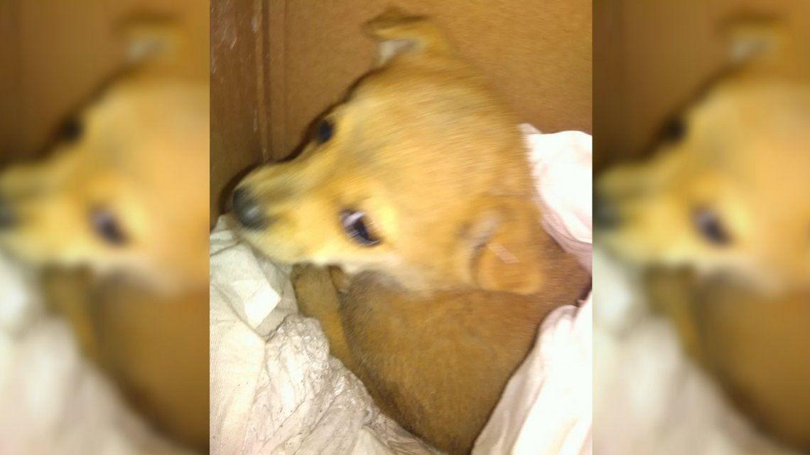 Escuchó llorar a un perrito en el camión de basura, lo rescató y el video conmovió en las redes