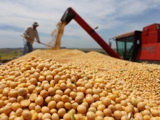 se desploma el precio internacional de la soja y complica a la argentina
