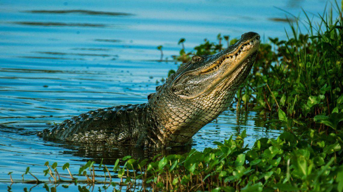 Un cocodrilo en Uganda mató y comió a una mujer y a su hijo de cinco meses