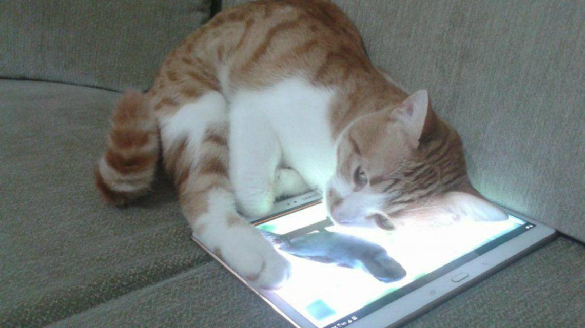 Mia es una gatita amante de la televisión