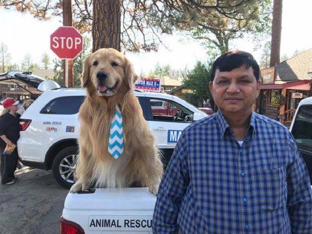 Un perro, elegido como alcalde de Idyllwild, California - Crédito: Facebook Mayor Max