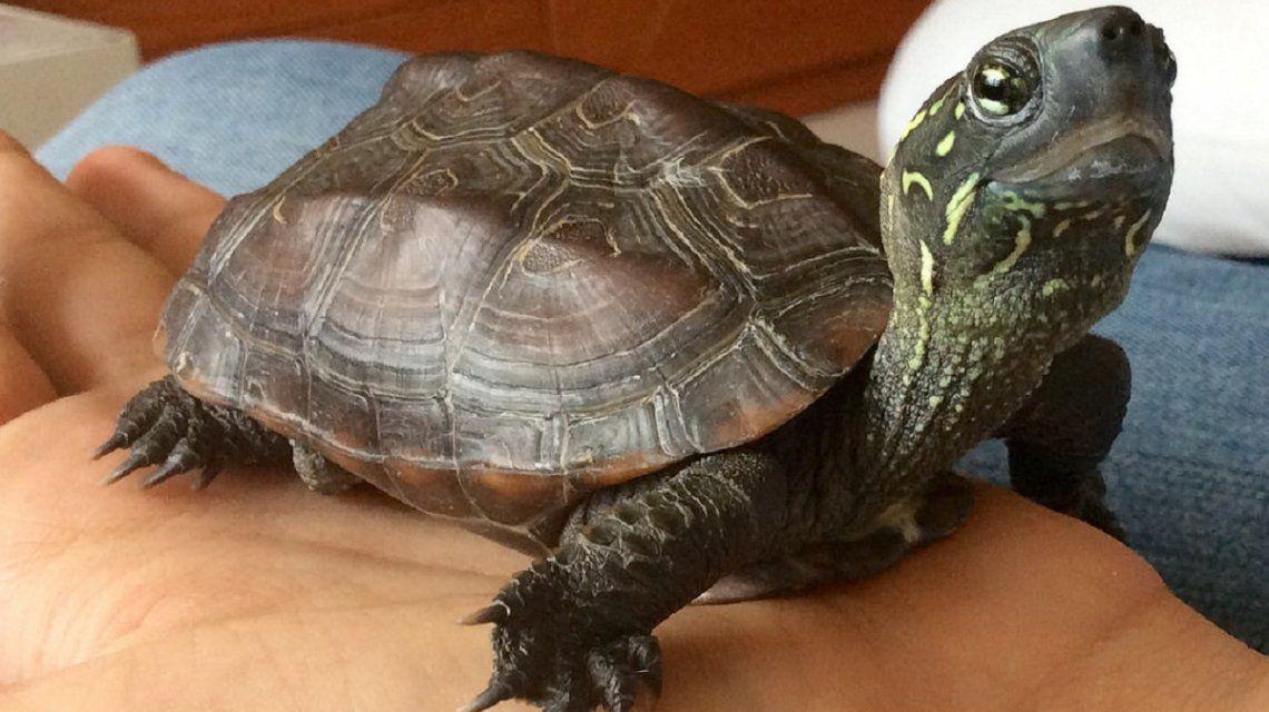Fue al hospital después de una fiesta: le encontraron una tortuga en su vagina