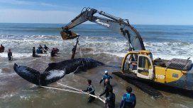 Rescate de una ballena en Mar del Tuyú - Crédito: Fundación Mundo Marino