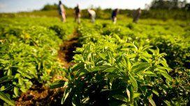 Prohíben la venta en todo el país de una sal y una stevia