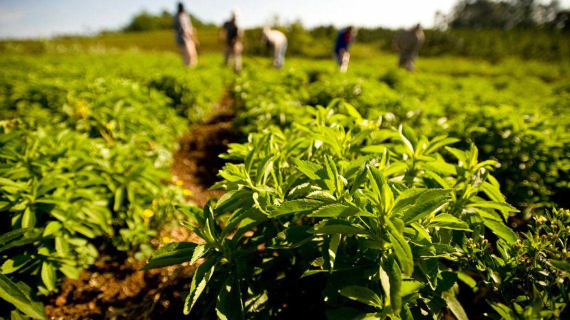 La Anmat prohibió una sal y una stevia