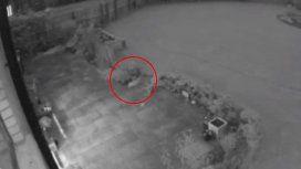 El misterioso caso del gato fantasma