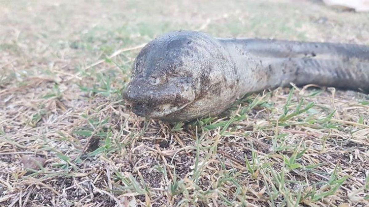 Carlos Paz: hallan un extraño animal en el lago San Roque