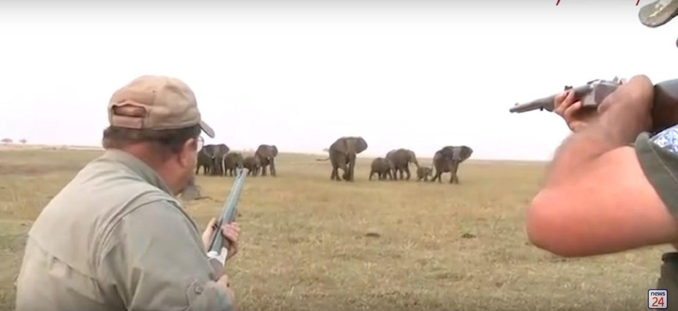 La reacción de los elefantes cuando cazadores matan a su líder