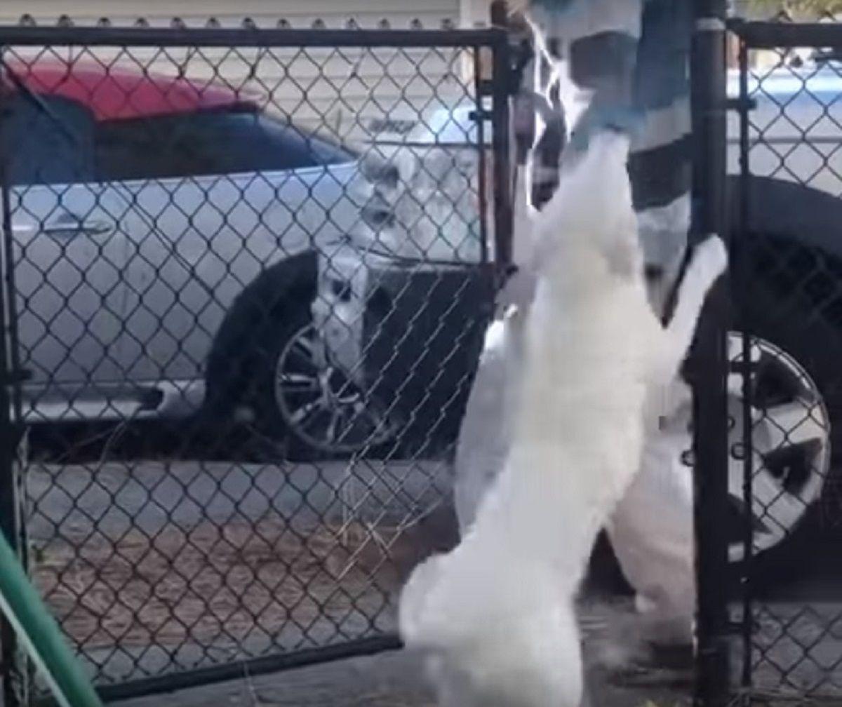 VIDEO: La reacción de una perra ciega y sorda cuando huele a su dueño