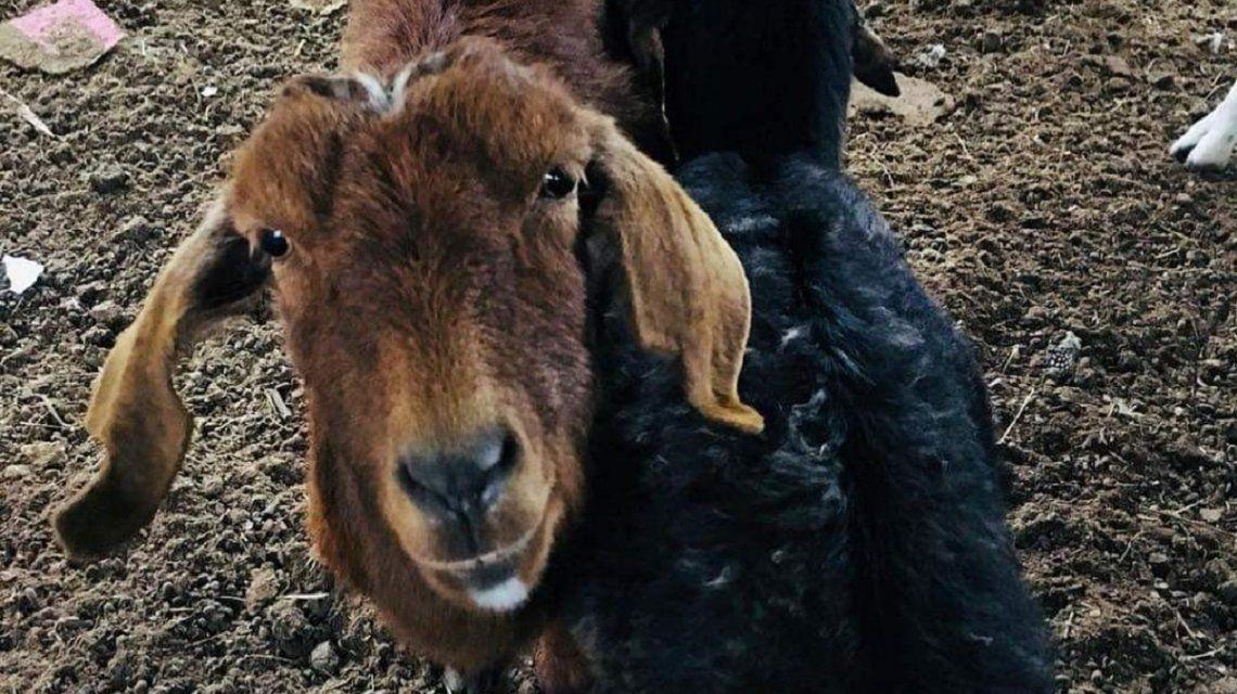 Piden ayuda para convertir un santuario de animales en un hospital veterinario