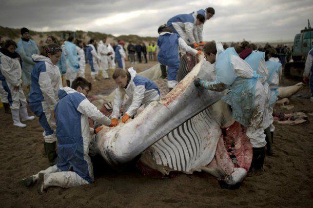 Tuvieron que trocear el cadáver para evitar que explote en la playa