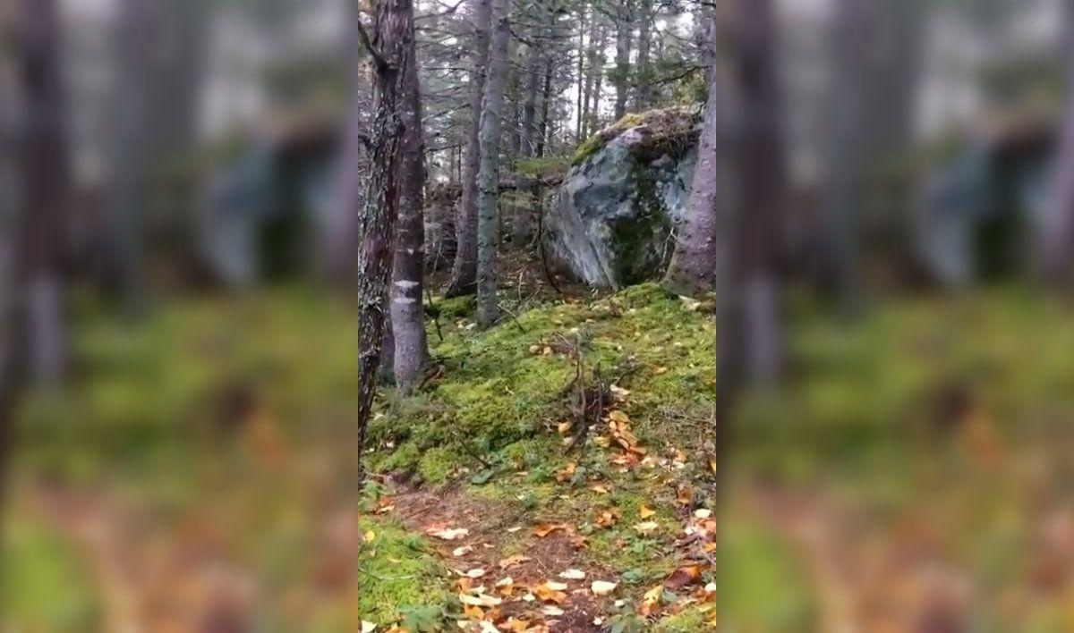 El bosque respira