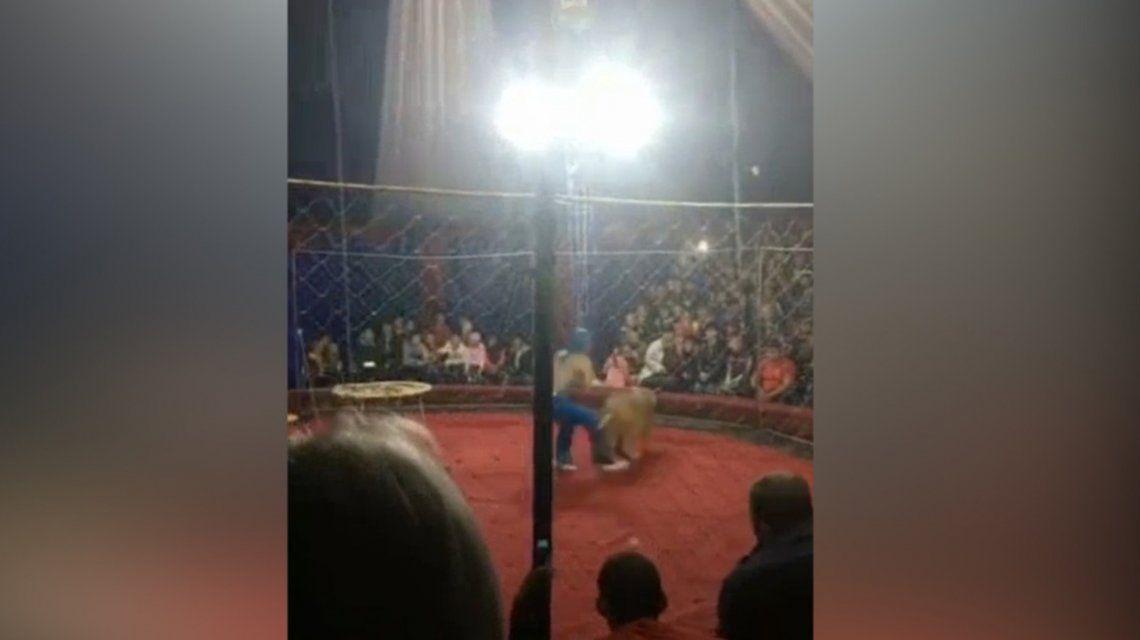 VIDEO: Una leona atacó a una nena de tres años en un circo de Rusia