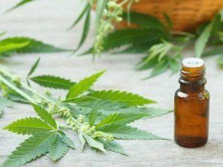 el garrahan comenzo a realizar ensayos medicos con aceite de cannabis