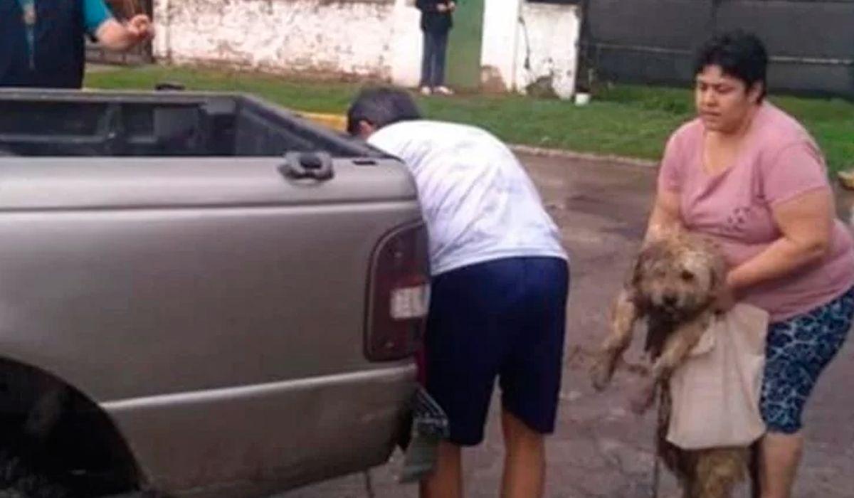La pareja dijo que no sabía que tenía al perro encadenado al paragolpes