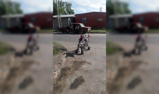Misterio en La Plata por la aparición de un cadáver de perro atado a un cochecito