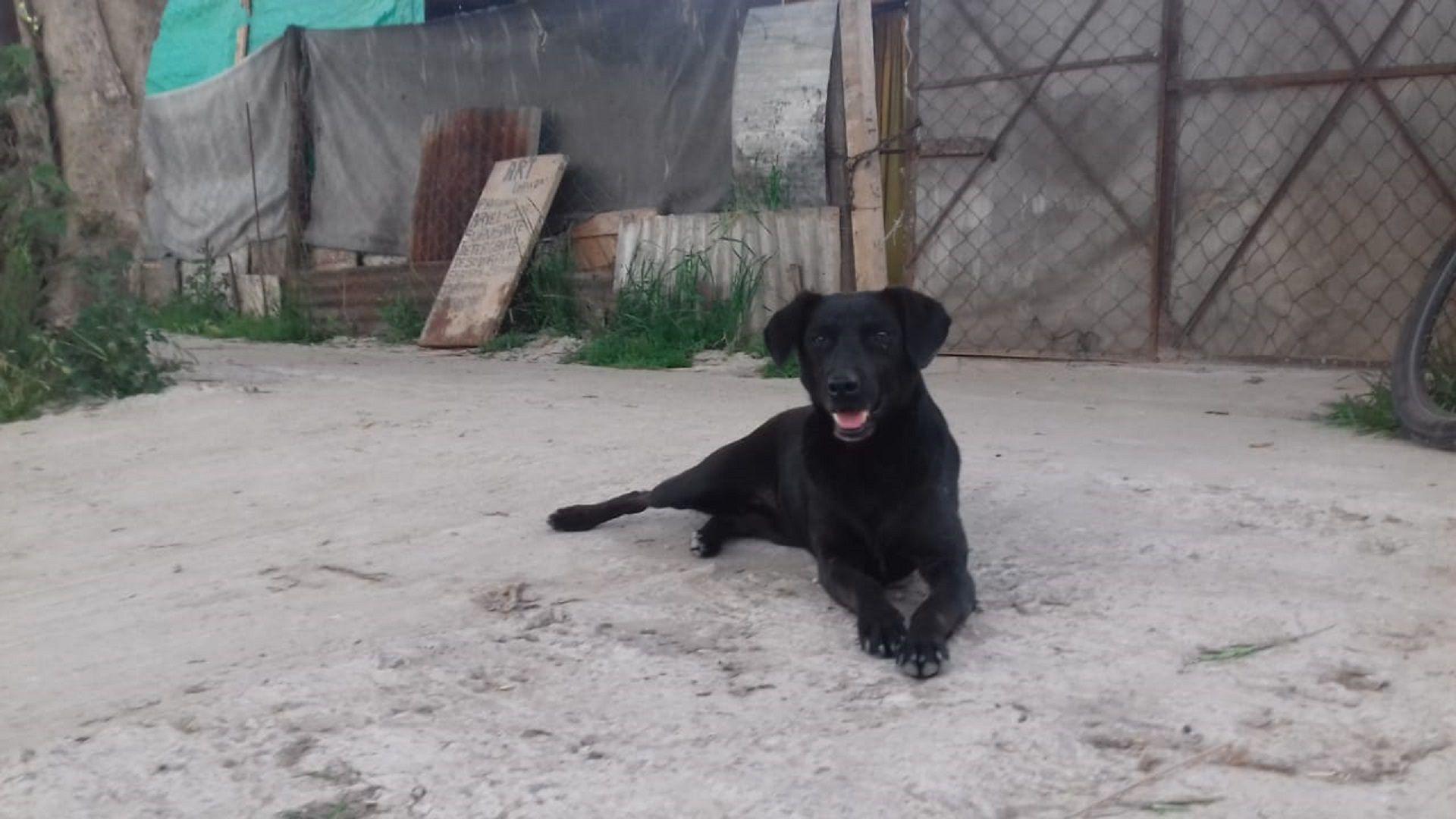 Un perro halló un feto muerto en una plaza y se lo llevó a su dueño