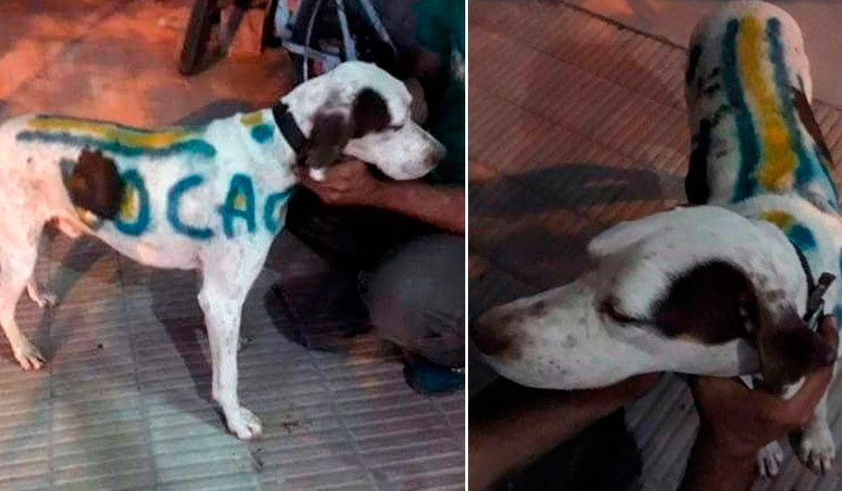 Locura por el Superclásico: un hincha pintó a su perro con los colores de Boca