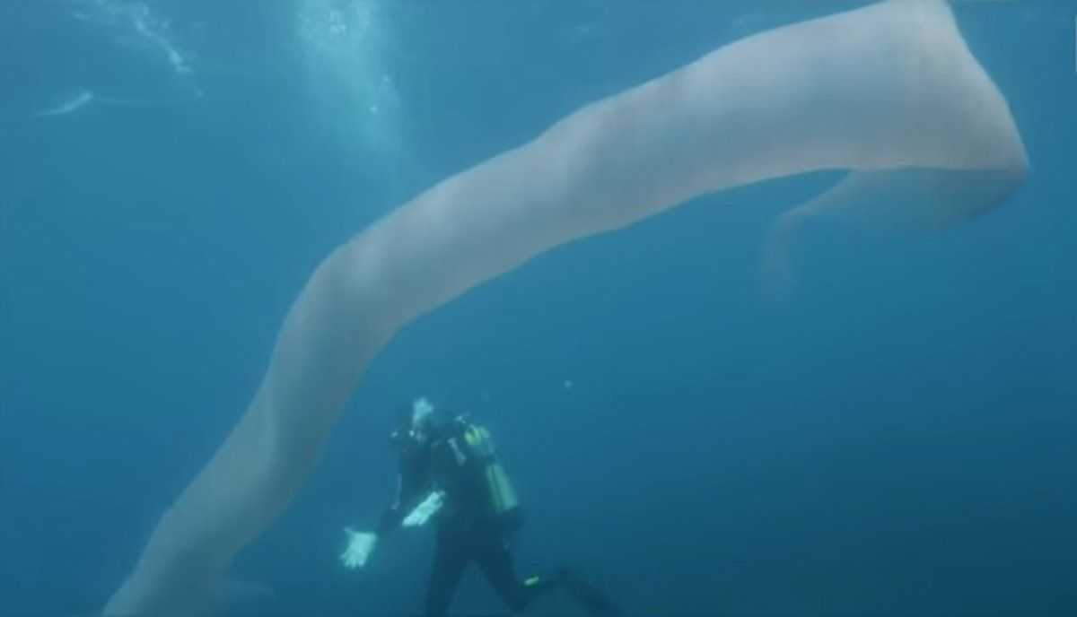 ¿Qué esta criatura de 8 metros?