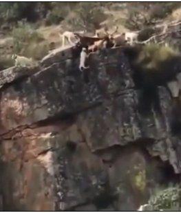 Doce perros y un ciervo caen al vacío en medio de una cacería