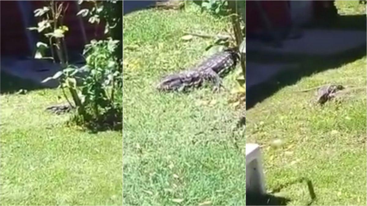 Se les metió un lagarto en el jardín de la casa