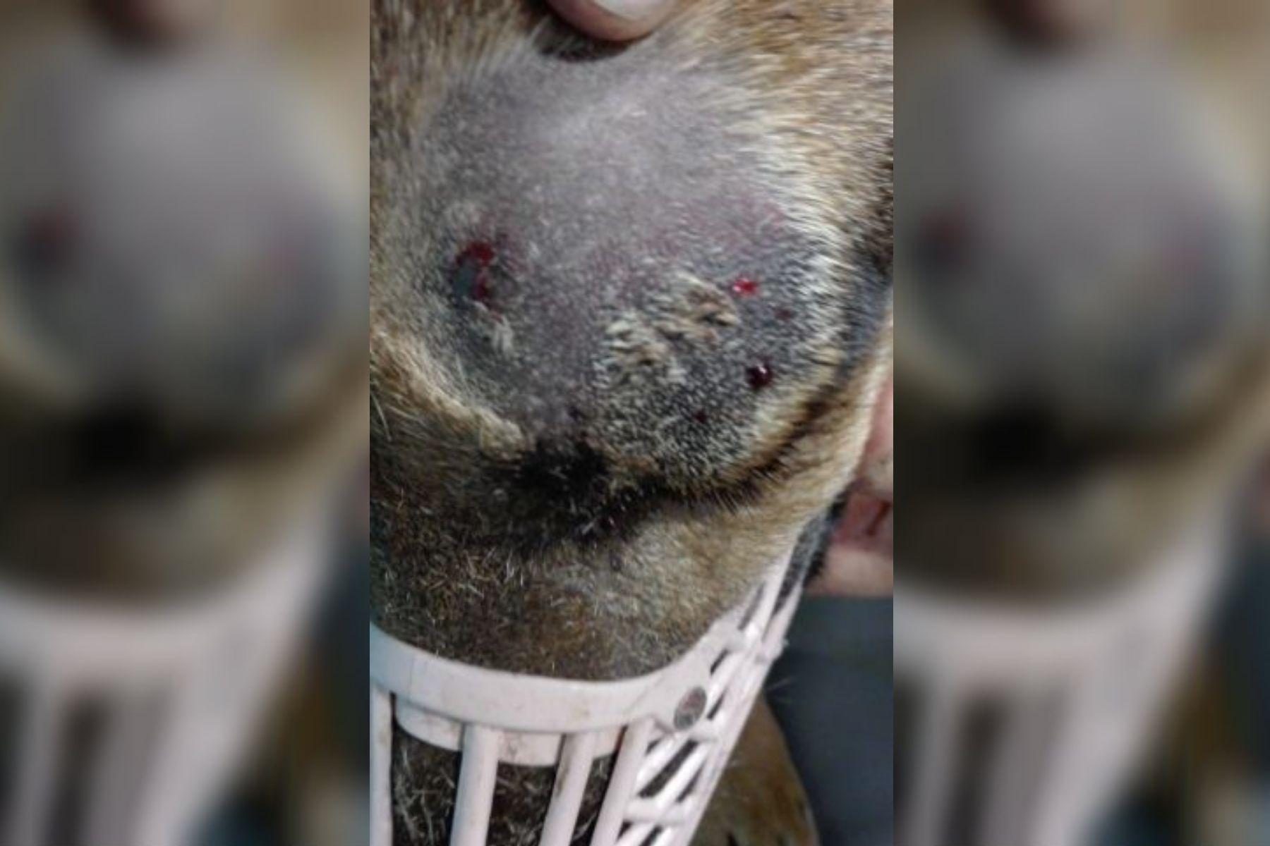 Mendoza: un perro salvó a un nene de ser mordido por una yarará y casi muere