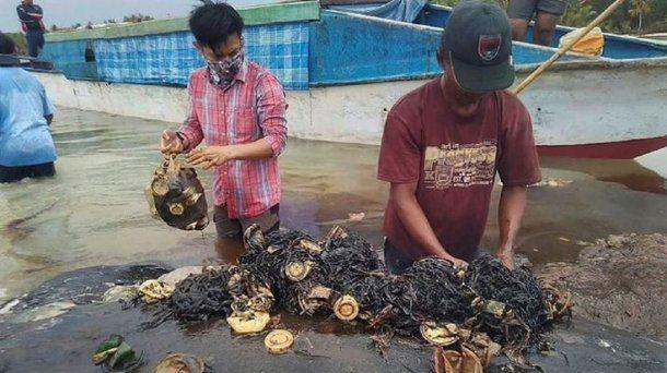 Encontraron 6 kilos de plástico en el estómago de una ballena