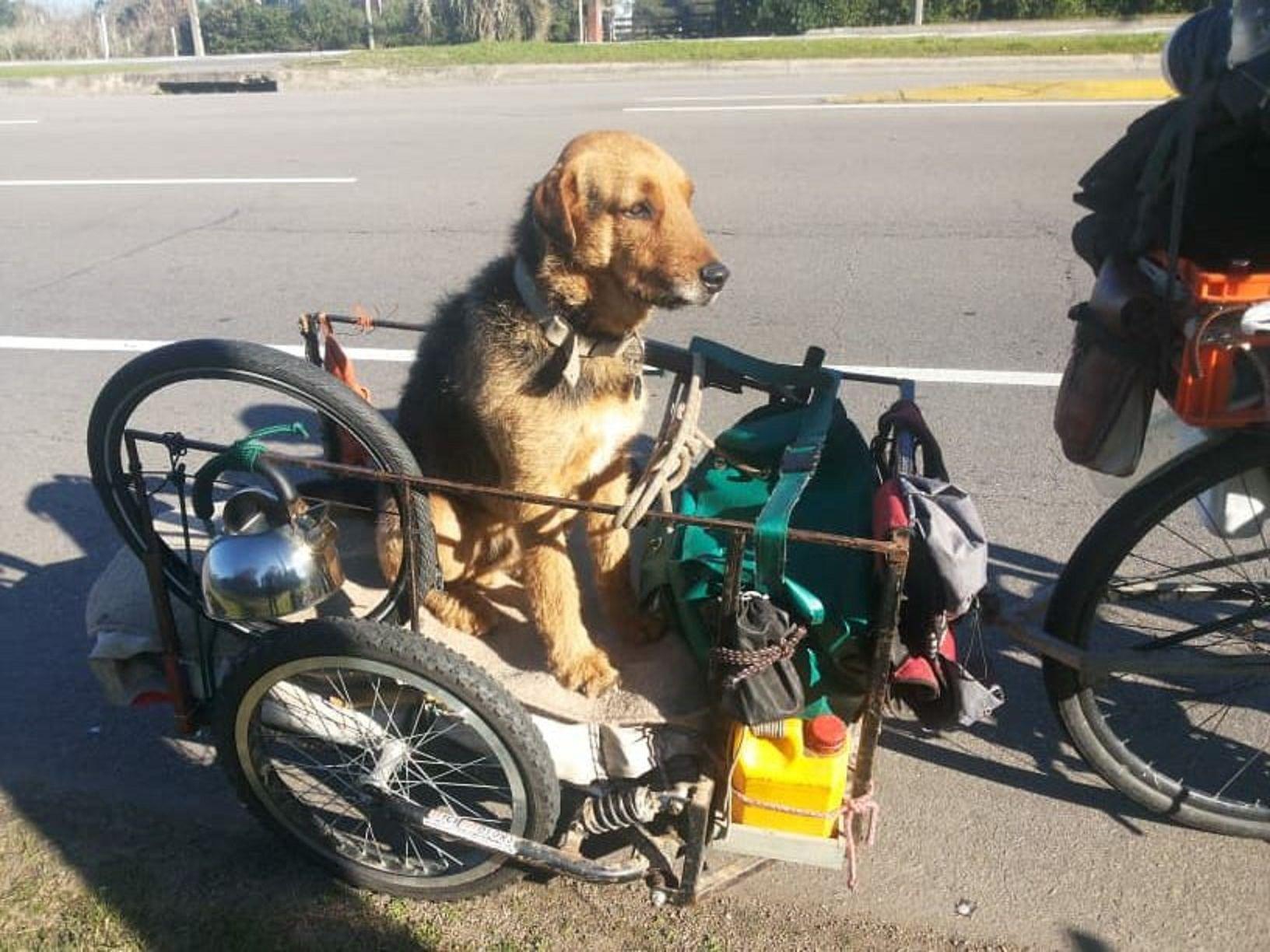 Se llevó a su perro a recorrer el país, pero se le perdió a mitad de camino