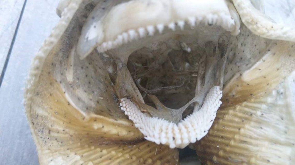 Macabro hallazgo de una criatura monstruosa en una playa de Nueva Zelanda