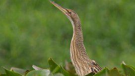 Temperley: sorpresa por la aparición de un extraño pájaro