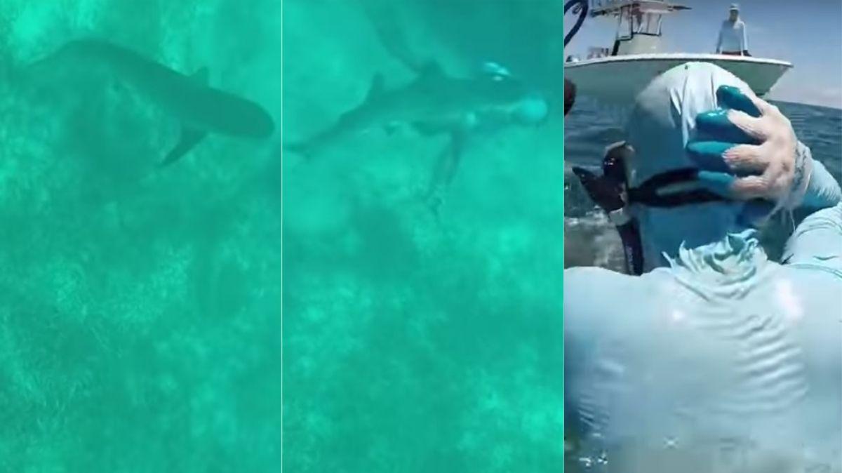 Un tiburón le mordió la cabeza y sobrevivió