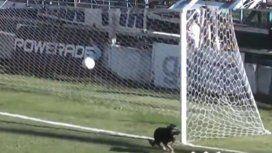 ¡Qué arquero! Un perro invadió el campo de juego y le salvó el partido al equipo