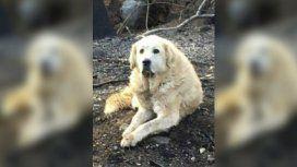 Un perro esperó un mes a sus dueños en su casa arrasada por un incendio