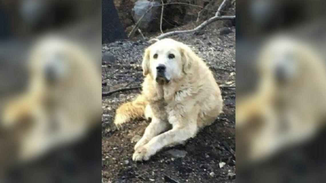 Incendio en California: un perro esperó un mes a sus dueños en su casa en ruinas