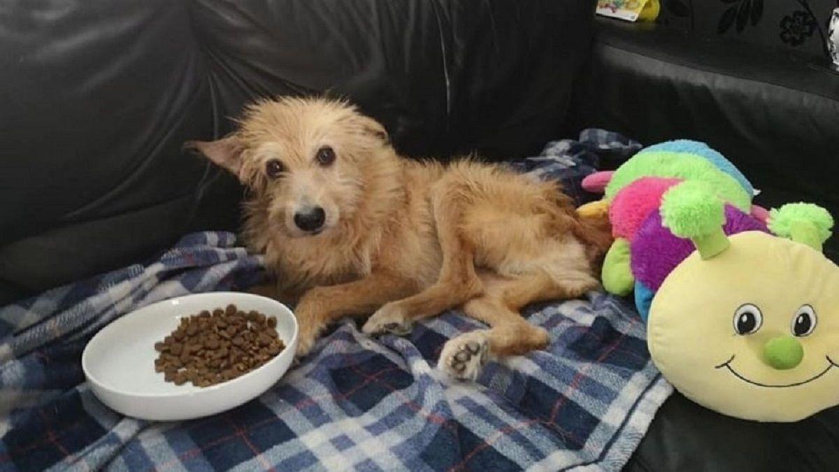La triste historia de Pincho, un perro que fue violado durante cinco años