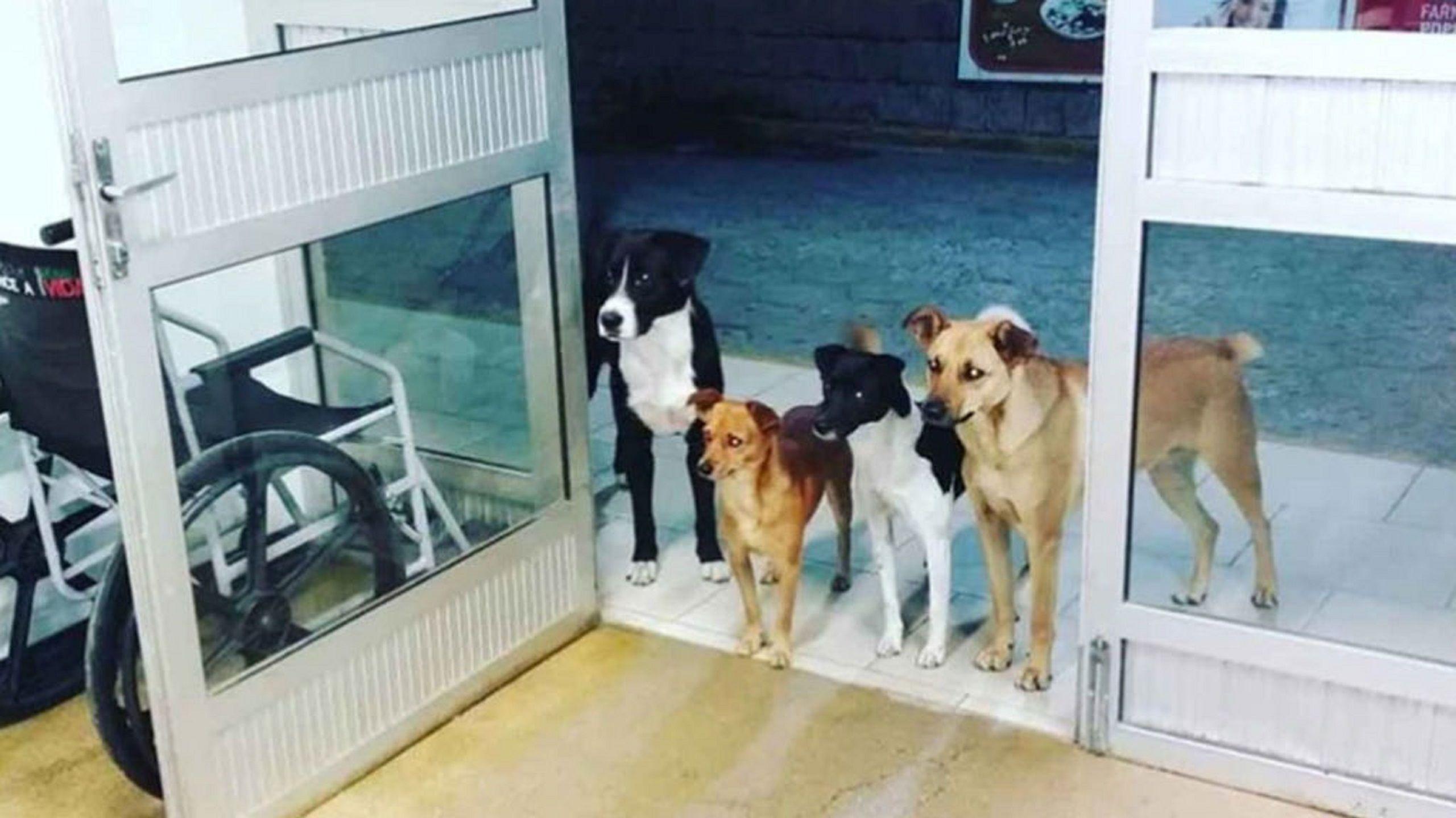 La imagen más conmovedora: cuatro perros esperaron en la puerta de un hospital mientras atendían a su dueño en urgencias