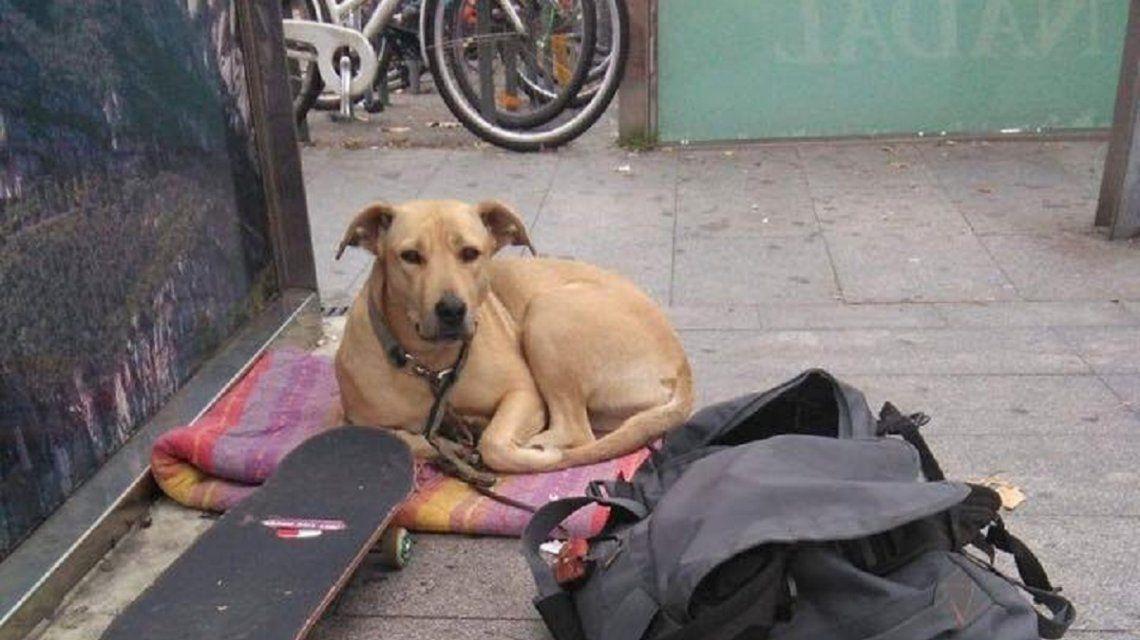 Barcelona: la Guardia Urbana mató de un tiro a la perra de un joven en situación de calle