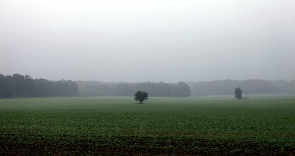 Paciencia: pronosticaron calor y lluvia para los próximos siete días