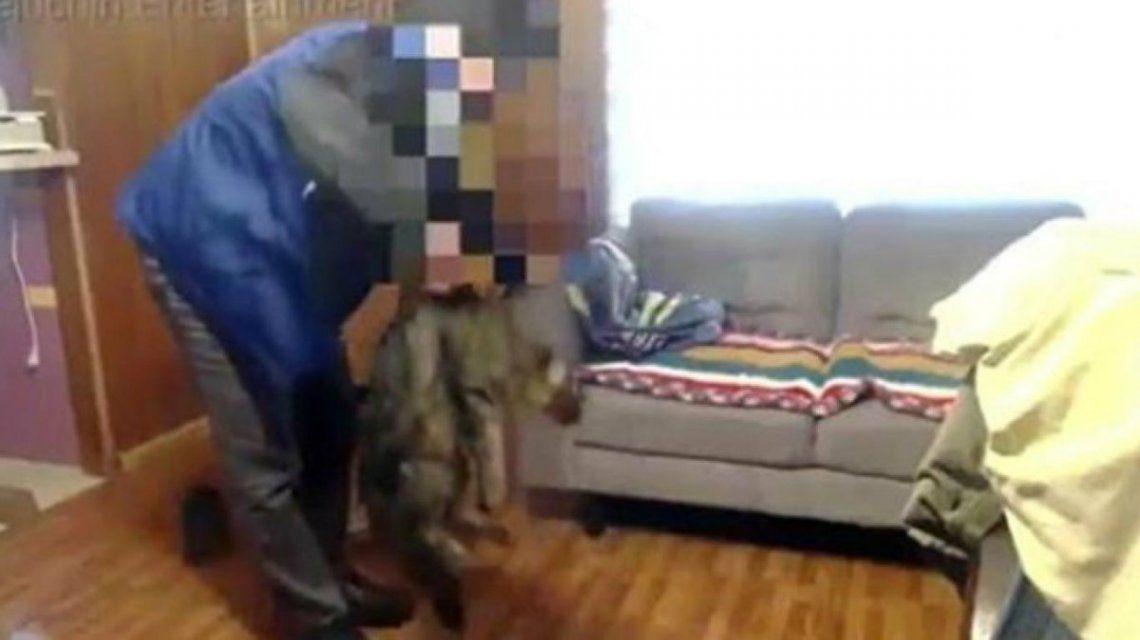 Youtuber asesinó a golpes a su gato y publicó el video: lo investiga la policía