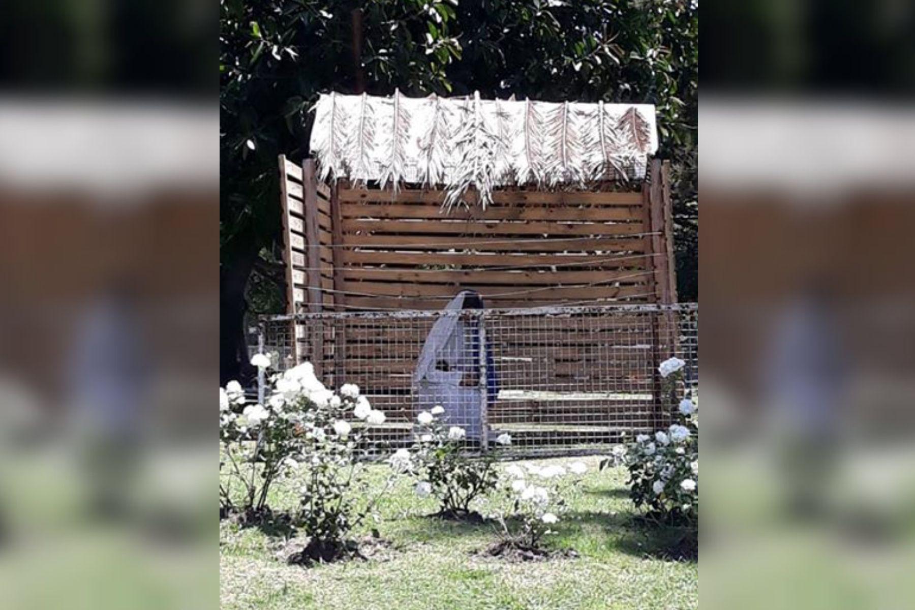 Insólito: robaron a José de un pesebre entrerriano y se lo llevaron de fiesta