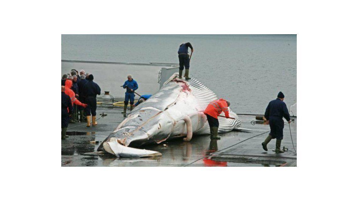 Es oficial: Japón volverá a cazar ballenas para su consumo comercial