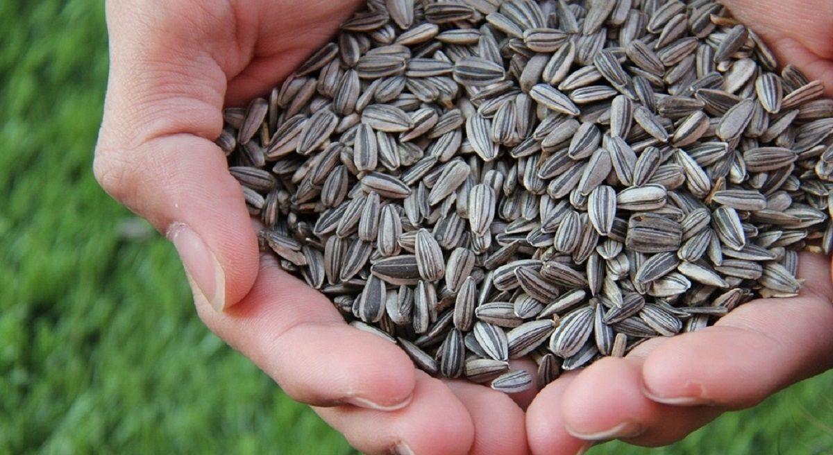 La Anmat prohibió en todo el país la venta de unas semillas de girasol y tres snacks