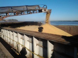 desde africa rechazan el trigo argentino por su mala calidad