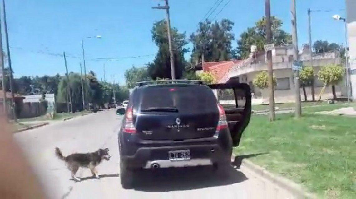 VIDEO: Un perro abandonado persiguió el auto de sus dueños por 15 cuadras y ni se inmutaron
