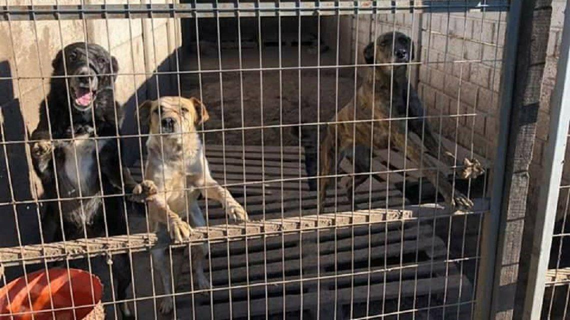 Perros alojados en Chivilcotas - Crédito: Chivilcotas