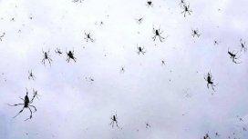 Una lluvia de arañas impresionó a todos en Brasil