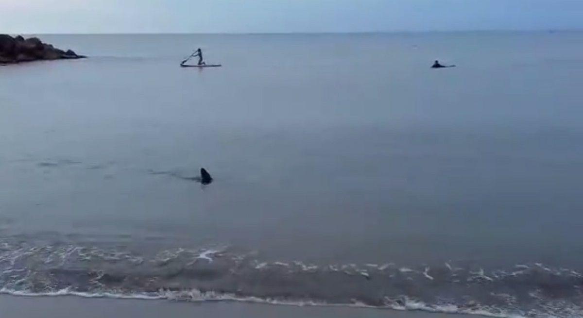 VIDEO: Un tiburón apareció en la orilla de Santa Clara