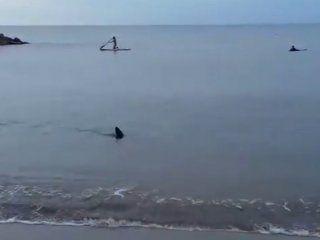 video: un tiburon aparecio en la orilla de santa clara
