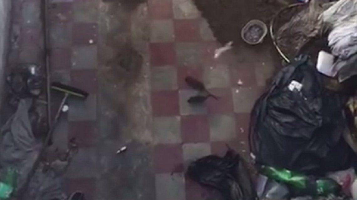 Pánico por el hantavirus en La Plata: un vecino tiene un basural en su casa y alimenta ratas
